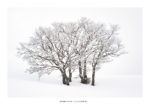 Arbres recouverts de givre sous la neige. Massif des Bauges.