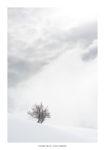 Arbre dans la neige et nuages. Massif des Bauges.