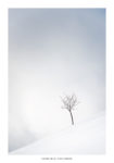 Petit arbre dans les nuages sous la neige. Massif des Bauge.